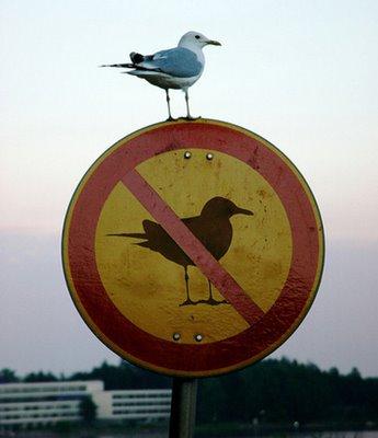 Нарушайте правила