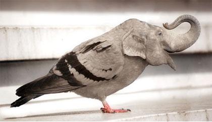 уникальный голубь