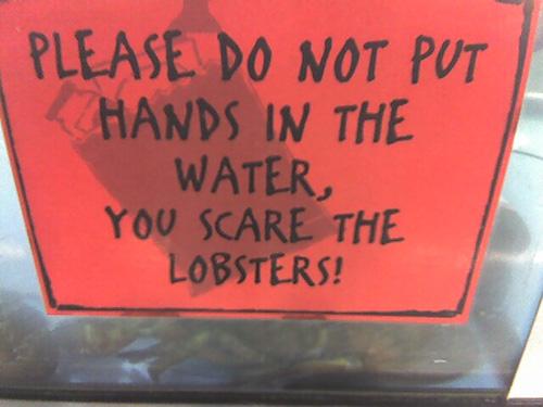 Не засовывайте руку в воду, вы пугаете лобстеров