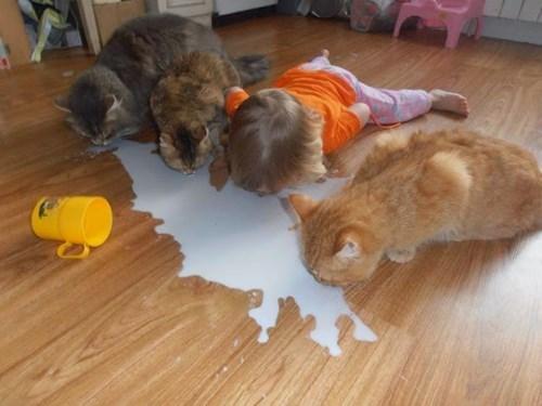 Не надо плакать над пролитым молоком, надо пить.